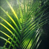 stock photo of foliage  - Lush green foliage in tropical jungle  - JPG