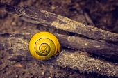 stock photo of snail-shell  - Closeup on a little yellow snail shell on brown dirt - JPG