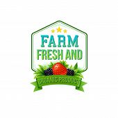 image of blackberries  - Farm Fresh and Organic Product vector emblem or label for farm fresh fruit depicted by a strawberry and blackberries over a green banner and hexagonal frame - JPG
