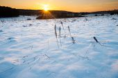 picture of tranquil  - Beautiful winter field covered by snow and distant trees in tranquil landscape - JPG