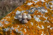 pic of snail-shell  - Snail shell on a rock covered with moss lichen orange - JPG