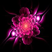 picture of amoeba  - Crazy abstract melted pinkish flower as wallpaper - JPG