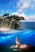 image of dolphins  - turtle in deep sea dolphin junping and sea gull flying above use for natural marine life and ocean wild life background - JPG