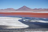 picture of eduardo avaroa  - Beautiful Laguna Colorada with flamingos and volcano in Bolivia, South America