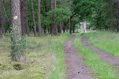 stock photo of dirt road  - The photograph shows the forest - JPG