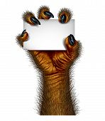 image of creatures  - Werewolf hand holding a blank card sign as a creepy creature for halloween or scary symbol with textured hairy and textured skin with cursed wolf monster fingers on a white background - JPG