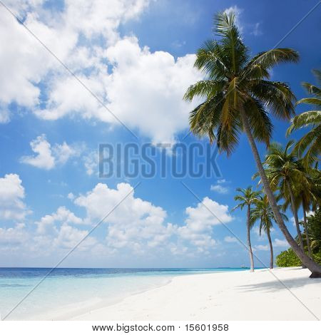 Beautiful tropical beach with palm