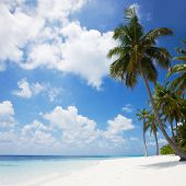picture of tropical island  - Beautiful tropical beach with palm trees - JPG