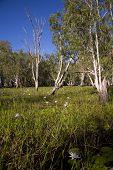 landscape Kakadu national park Australia