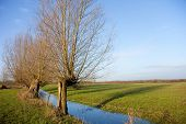 Typical Dutch landscape with pollard willows