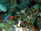 Aquarium Leben