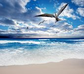 Sea Birds flying over a gorgeous ocean scene