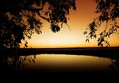 Gentle breeze blows the trees in front of a sunset