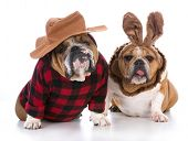 dogs dressed up like a hunter and a rabbit on white background poster