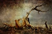 A 3000 year old Bristolcone Pine tree on a grunge background