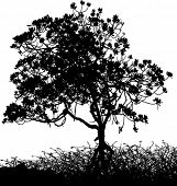 Vector silhouette of a tree and shrubs