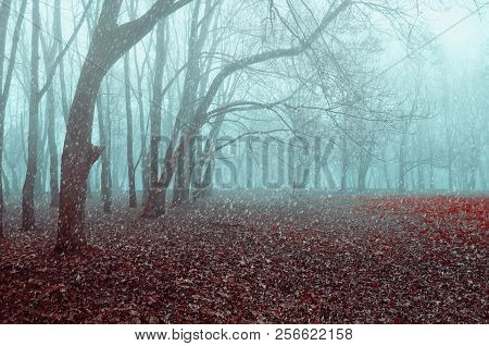 poster of Autumn November landscape. Foggy autumn park with snow falling on the dry autumn leaves. The end of the autumn season.  Autumn landscape scene
