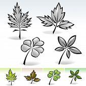Novo! Coleção de folhas da natureza
