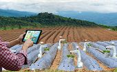 Farmer Holding A Tablet Smart Arm Robot Work Strawberry Care Agricultural Machinery Technology poster