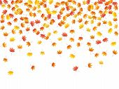 Maple Leaves Vector Background, Autumn Foliage On White Illustration. Canadian Symbol Maple Red Oran poster