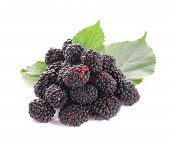 Ripe Blackberry Isolated On White Background With Clipping Path. poster