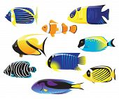 tropical fishes collection
