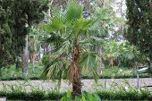 Palm Tree. Tropical Palm. Beautiful Tree. Palm Leaf. poster