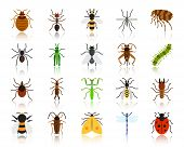Danger Insect Flat Icons Set. Web Sign Kit Of Bugs. Beetle Pictogram Collection Includes Dragonfly,  poster