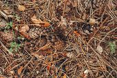 Beautiful Macro Of Autumn Pinecones With Colorful Yellow Red Dry Leaves And Old Pine Tree Needles On poster