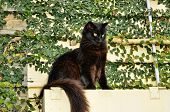 Black Cat on a Ledge