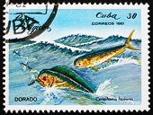 Postage stamp Cuba 1981 Common Dolphinfish, Dorado