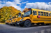 stock photo of row trees  - Row of yellow school buses on a sunny autumn day - JPG