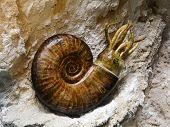 Prehistoric Ammonite