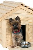 stock photo of dog-house  - small wooden dog - JPG