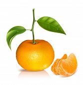 Photo-realistic vector illustration. Fresh tangerine fruits with green leaves and slices.