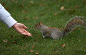 Brown Squirrel Eating