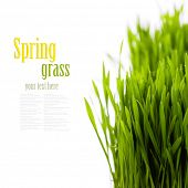 fresh spring green grass over white (with easy removable sample text)