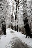stock photo of ekaterinburg  - Winter in dendrological park in Ekaterinburg Russia - JPG