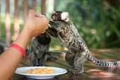 Sharing Food With Small Monkey