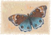 Beautiful butterfly on a retro background. All objects are isolated