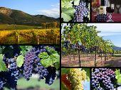 Vineyard Collection