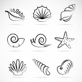 image of scallop shell  - Vector collection of sea shells and snail - JPG