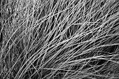 Grass. Natural diagonal textured background.