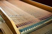 Closeup Of Grand Piano Showing The Strings, Pegs And Sound Board.