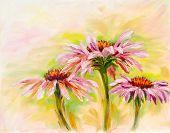 Echinacea, oil painting