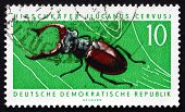 Postage Stamp Gdr 1963 Stag Beetle, Insect