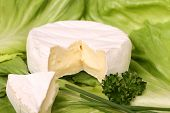 Cut Soft Cheese