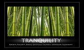 Bamboo Tranquility - a green hardwood stand of bamboo. The word Tranquility and other words that mean same.