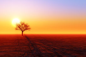 picture of dead plant  - dry tree silhouette in desert below sunset - JPG
