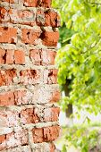 Brick Wall With Half Blurred Leaves
